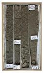Borehole Sediment Samples: Canterbury Museum