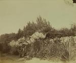 Photograph: Government Gardens, Christchurch
