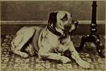 Photograph: Dog