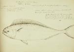 Sketch: Coryphoene, 10 October 1850