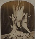 Photograph: The Golden Plover by Wallis, 1862, Carving
