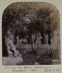 Photographic Print: Olive Tree Garden, 1874