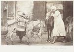 Photograph: Boys with Donkeys, Cairo