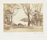 Photograph: Botanical Gardens, Sydney, New South Wales