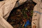 Digital Photograph: Dead Flowers