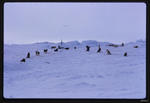 Slide: Dog Lines, Antarctica