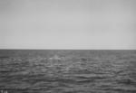 Photograph: Sperm Whale Blowing